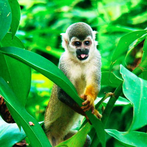 AMAZONAS EXCURSIÓN AÉREA.
