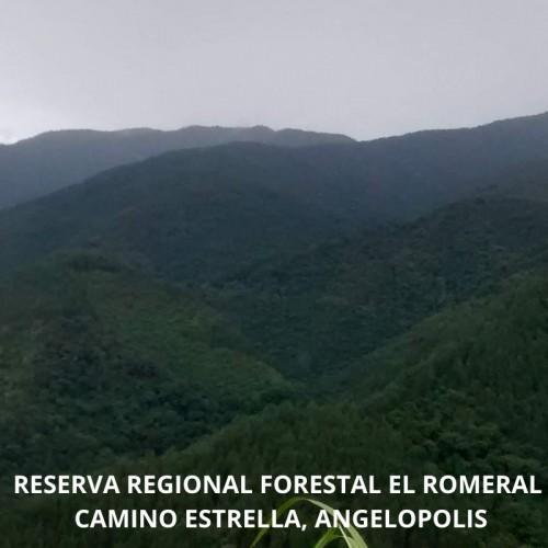 RESERVA FORESTAL EL ROMERAL - ALTO DE BANDERAS  MUNICIPIO LA ESTRELLA - ANGELOPOLIS , REGIONAL ( ANTIOQUIA)